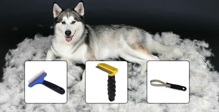 5 Steps How to Groom a Siberian Husky