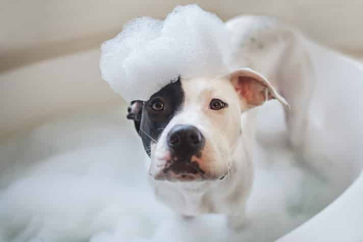 Human Shampoo on Dogs