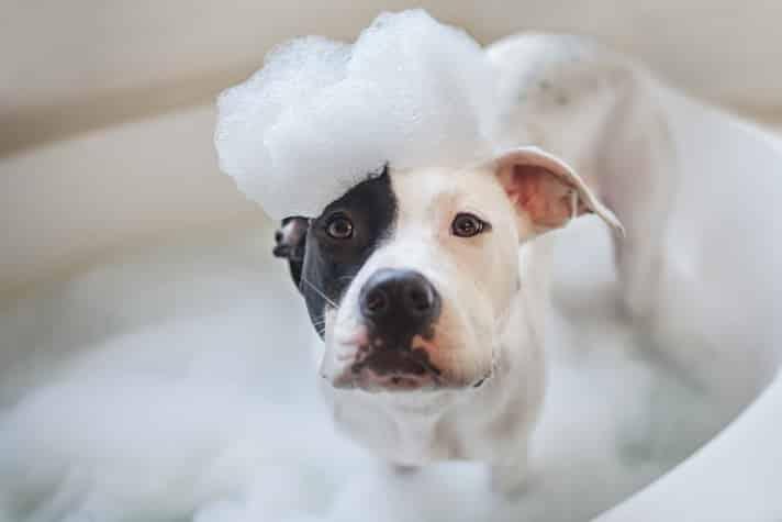 Dog wash, puppy gets a bath