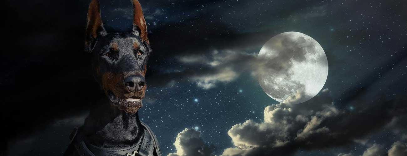 Doberman Pinscher Inside Dogs World