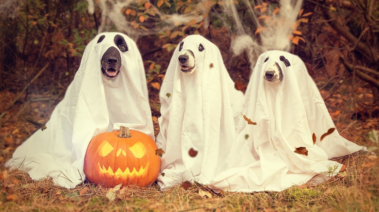 how to make your dog feel safe at halloween - inside dogs world