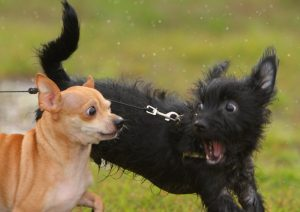 4 Ways to Control Your Dog's Barking Behavio...