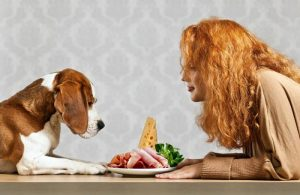 11 Human Foods that are Harmful to Your Pets