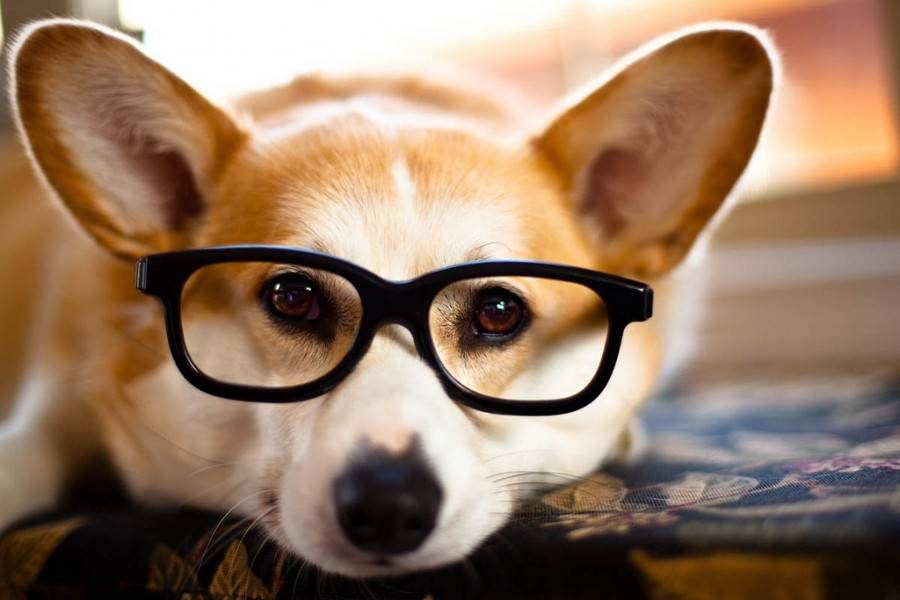 Top 6 Most Intelligent Dogs In The World Inside Dogs World