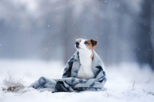 Dogs and Snow: 5 Tips to Protect Your Dog During W...