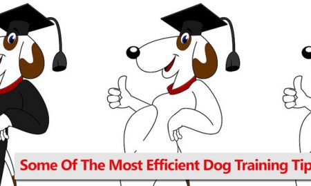 Best Dog Training Tips and Tools