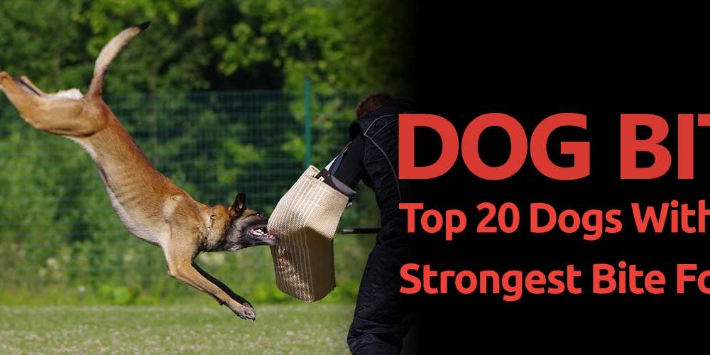 Dog Bite Top 20 Dogs With The Strongest Bite Force
